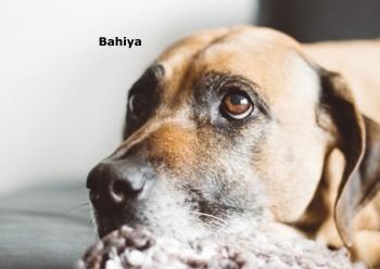 Bahiya