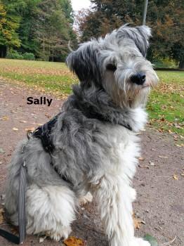 SallySe