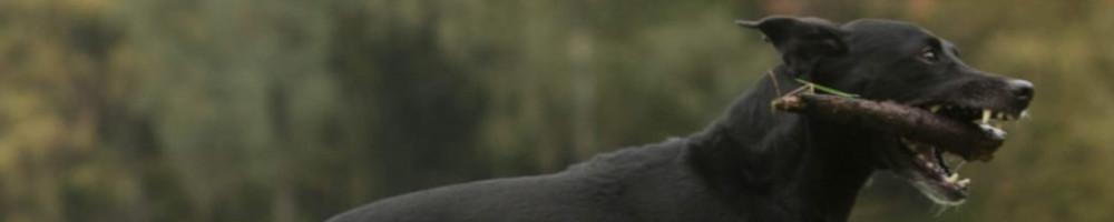 Tierarzt Header-Bild